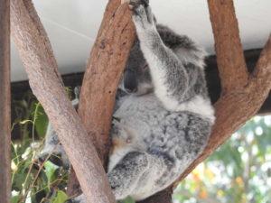 オーストラリア動物園