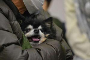 モデル犬オーナー様感謝祭